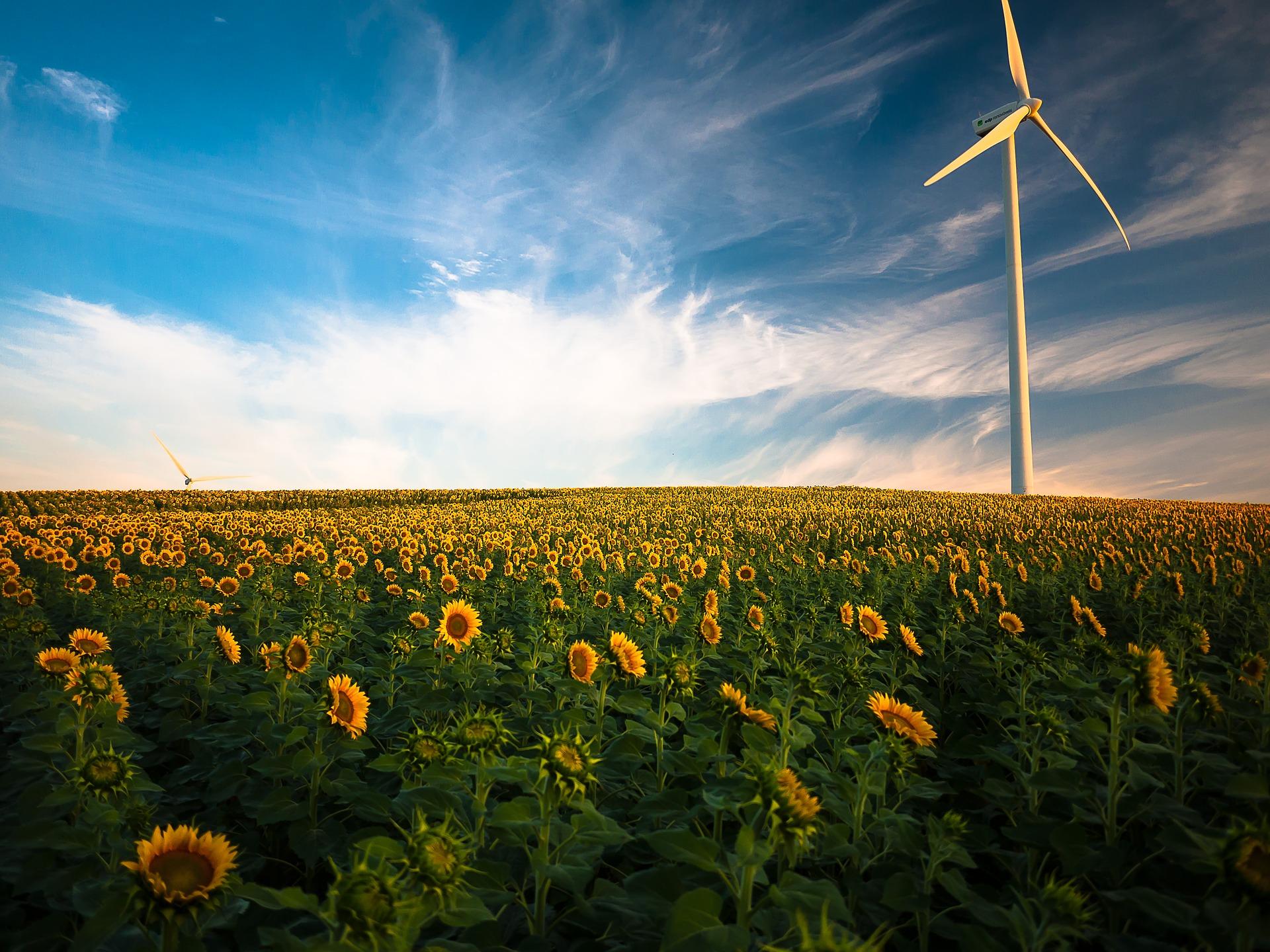 La minorité des impacts environnementaux de l'énergie renouvelable